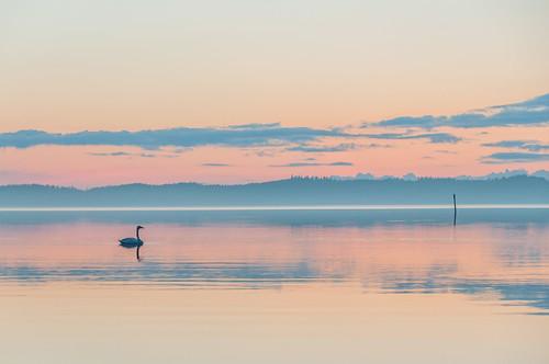 sunset summer sky cloud lake reflection bird water fog skyline clouds suomi finland outside outdoors nikon europe horizon handheld nikkor savonlinna highiso 2014 18200mm d90 nikond90