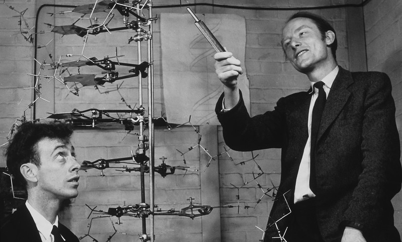 Crick and Watson showing their DNA model in 1953