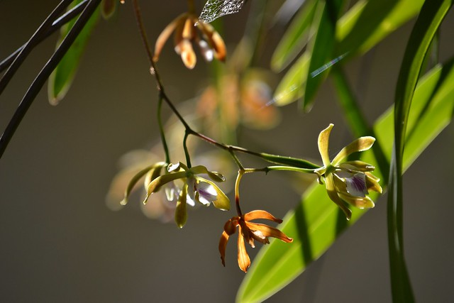 Tiny orchids in dazzling morning light