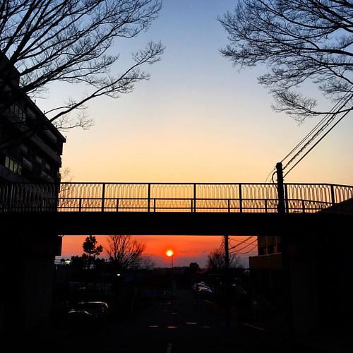 夕焼け小焼け! ワンコと散歩 #japanese #sky #sunset #イマソラ #いまそら
