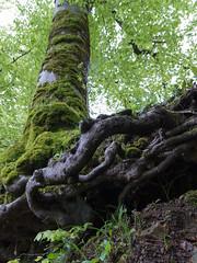 les racines à l'air