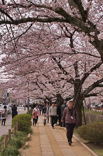 【写真】2013 桜 : 哲学の道/2018-12-24/IMGP9259