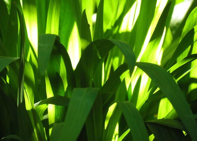 Sunshine Shades of Green