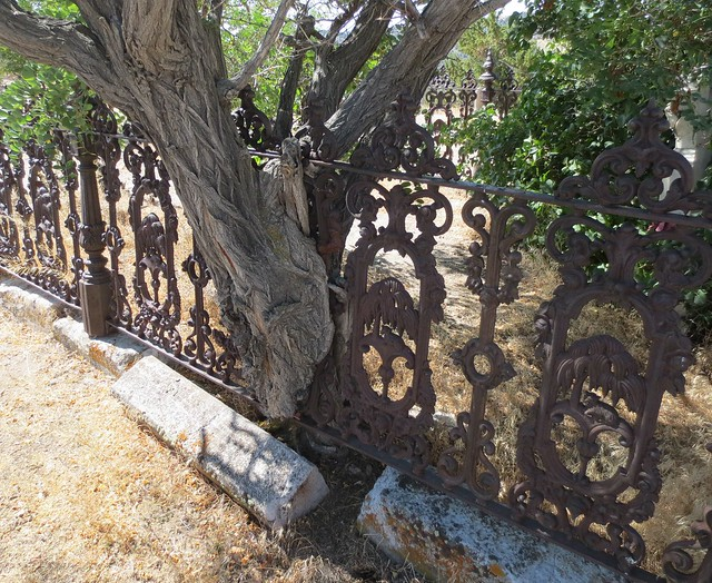 Tree growing through iron fence