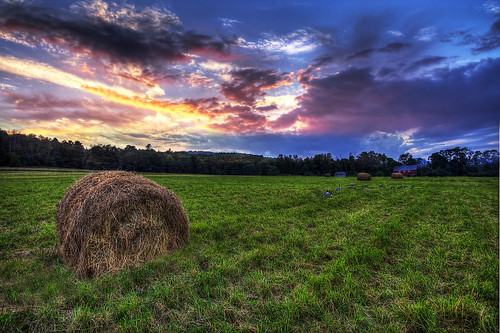 sunset sky grass geese dusk newengland newhampshire haystacks canadiangeese hay hayfield hdr canadageese enfieldnh photomatrix canon5dmarkii