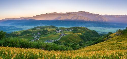 panorama mountain flower sunrise lumix taiwan olympus daylily hualien omd 花蓮 日出 六十石山 金針 em5 晨昏 hualiencounty fulitownship panasonic1235f28