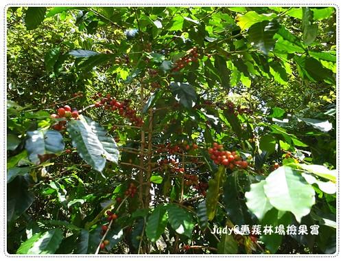 惠蓀林場20130928-2