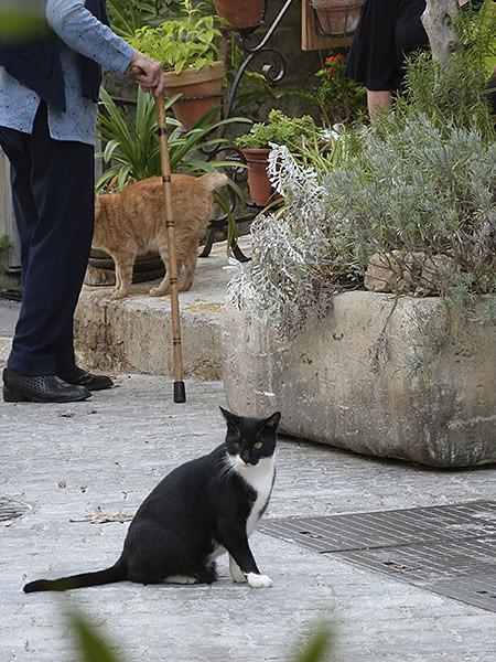deux chats à Mougins