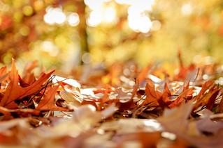 Autumn Sanssouci 2013