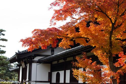 IMG_5085東福寺