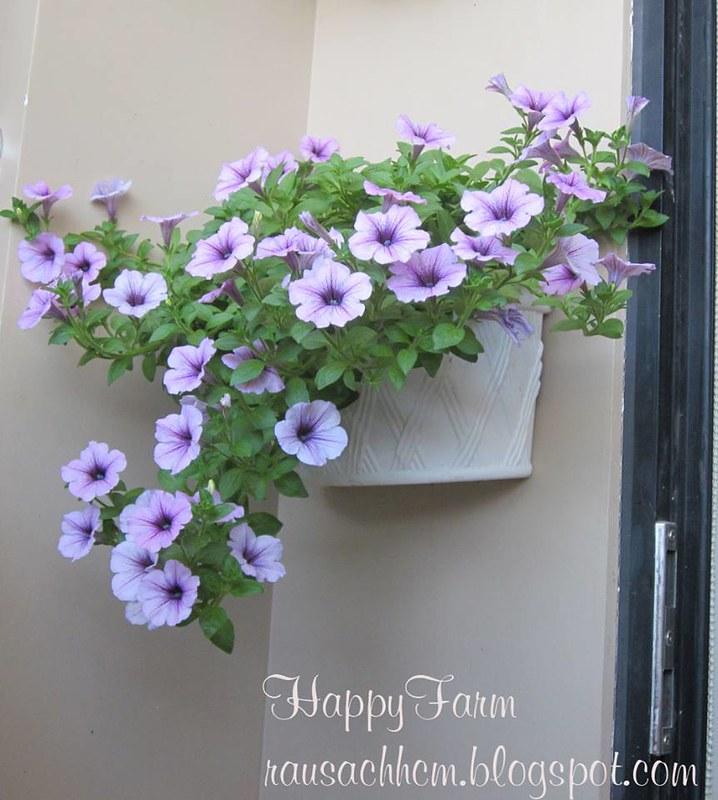 Chậu nhựa Nhật đẹp, bền trồng hoa, rau sạch - 1