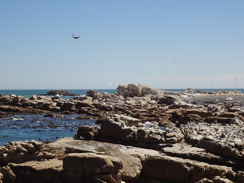 Cape gannets and Crowned cormorants