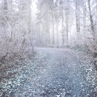 Free stock: Winter Forest