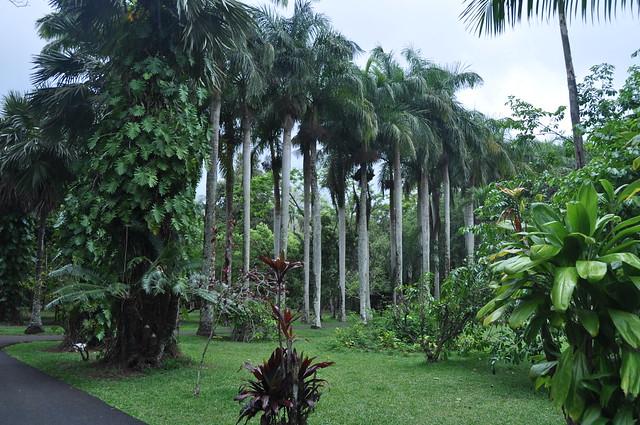 Jardin botanique sir seewoosagur ramgoolam jardin de for Au jardin du gouverneur