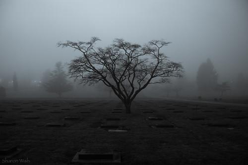 sharonwish bluechameleon bluechameleonphotography bw cemetery fog graves headstones moody mountainviewcemetery night trees blackandwhite artlibre