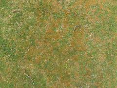 Grass_green-orangemoss-sticks-clover_wide.jpg