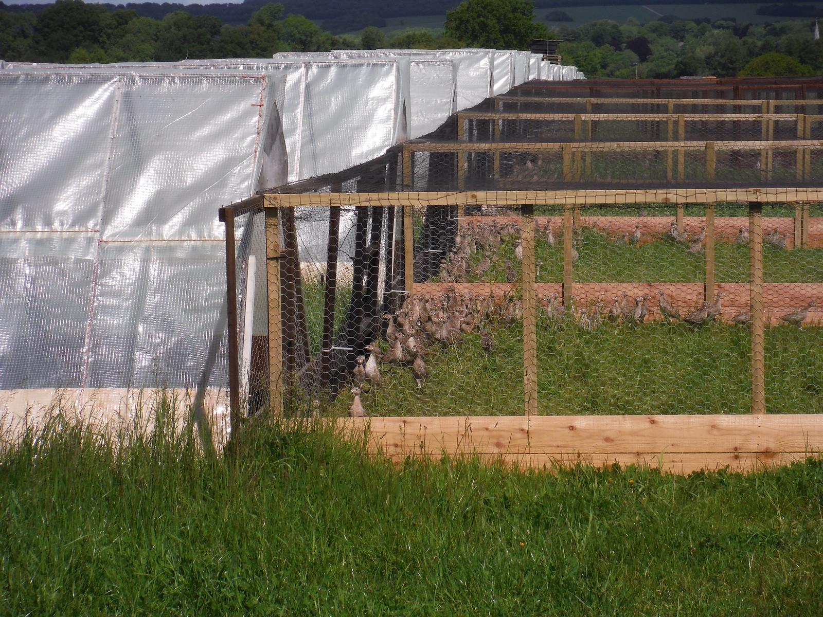 Pheasant Farm, Chilmark Common SWC Walk 249 Tisbury Circular via Dinton and Fovant