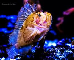 Proud Fishy