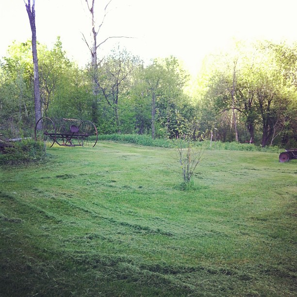 It looks so pretty after a mowing, and I can see the shape of things, and make plans for the farm. #farm #homestead