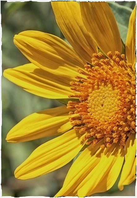 Gratitude - A Desert Wisdom Card