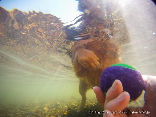 GoPro Under Water-6005