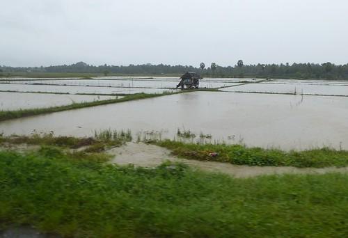 Sulawesi13-Sengkang-Pare Pare (14)