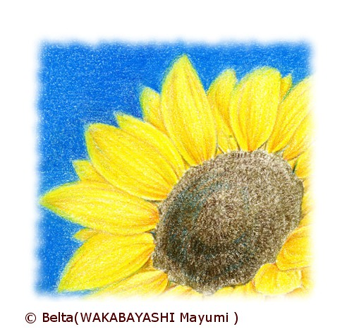 2013_07_25_sunflower_01_s by blue_belta