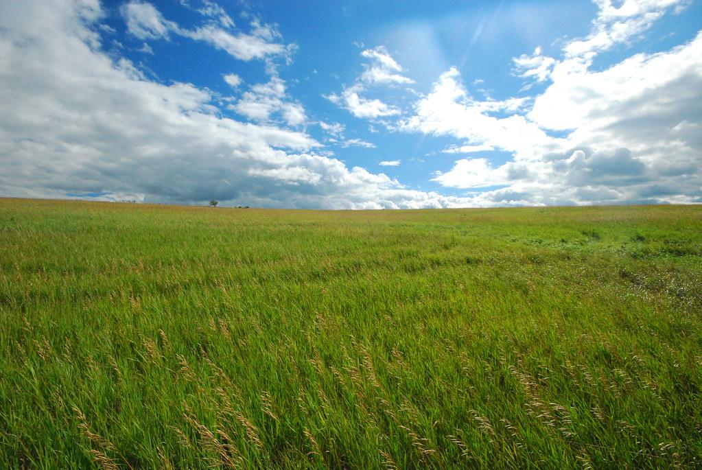 Windswept Prairie - Page 2 9398020252_1c39976a7a_b