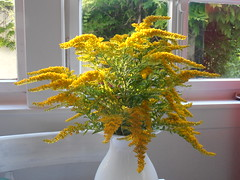 shrub, flower arranging, flower, branch, leaf, yellow, tree, floral design, plant, houseplant, flora, produce, floristry,