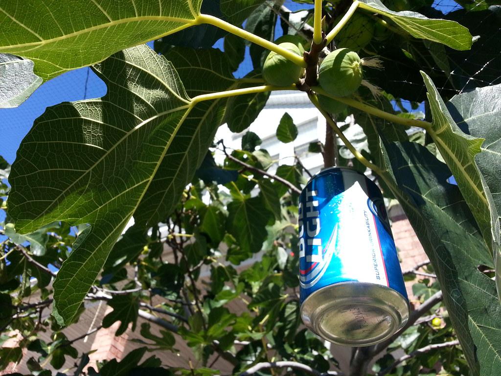 Bud Light bird repellent | This device operates on the princ