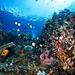 Anemone city reefscape by Luko GR