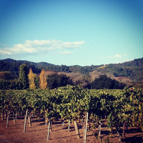 Vineyard in the morning.