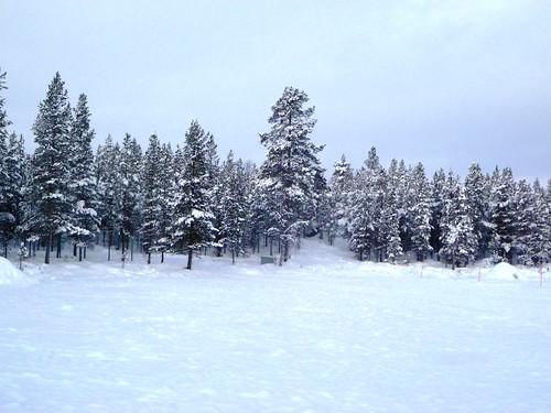 trees suomi finland inari lapland lappi vasatokka riutula