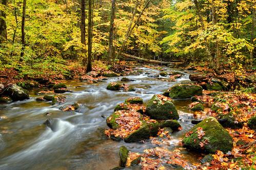 fallfoliageautumncolorcolorsberkshirecountylandscapenature riverstreammountainmountainsleavesflowflowingwetrainrainyday