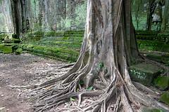 Ta Prohm - Tree and Wall