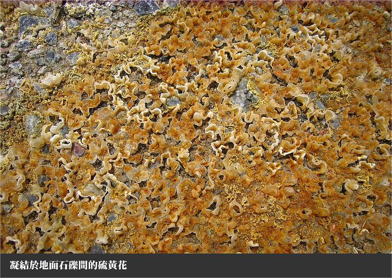 凝結於地面石礫間的硫黃花