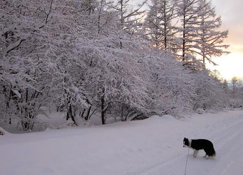 積雪後の夕方の散歩 2013年12月20日16:25 by Poran111