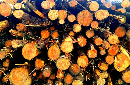 Black Mountain Woodpile