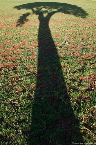 A la sombra de un pino.jpg