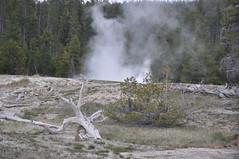 Bead Geyser in eruption (1:02 PM on, 3 June 2013) 01