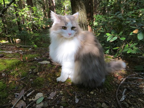 Cat o' the woods