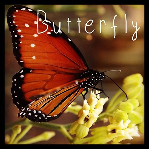 Garden Alphabet: Butterfly | A Gardener's Notebook