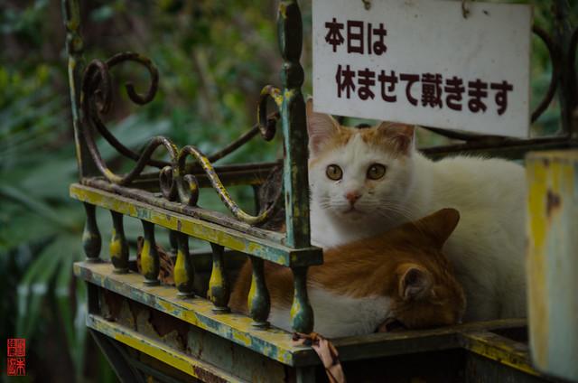 「本日は休ませて戴きます」 哲学の道 - 京都