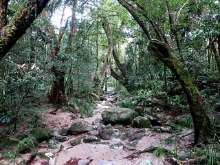 Dried creek bed - Mossman Gorge