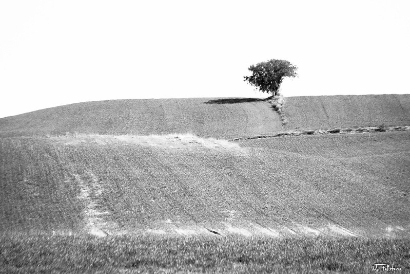 Arbol solitario