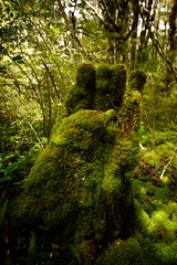 The Mossy Hand