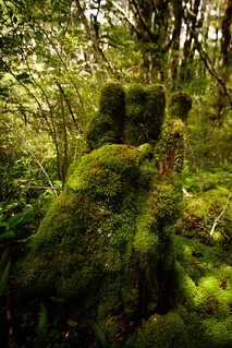 The Mossy Hand | by Photography by Sue
