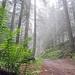 Ferns in the mist by Rosmarie Wirz