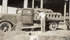 Allan Gale was a Wheat agent at Calomba Rail Siding 1935 - 1944