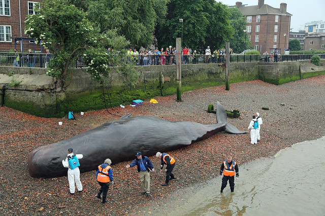 Greenwich Whale